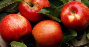 Самый полезный фрукт яблоко