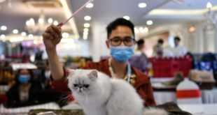kakoe_zhivotnoe_naibolee_podverzheno_koronavirusu.jpg