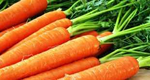 Морковь-–-лидер-среди-овощей-по-полезным-свойствам
